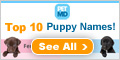 Top 10 Puppy Names