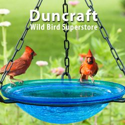 Shop Duncraft Wild Bird Superstore for over 150 Bird Bath Designs. Prices Start at $12.95!