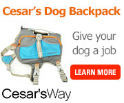 Cesar Millan's Dog Backpack -Shop Now!