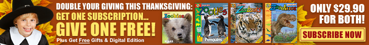 728x90 Thanksgiving Special - Ends November 29th