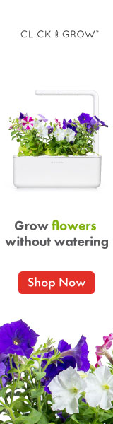 Grow Strawberry Plants in Your Home