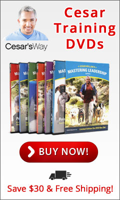 Improve your dog's behavior with Training DVD's From CesarsWay.com!