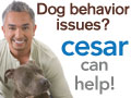 Dog behavior issues? Dog Whisperer Cesar Millan ca