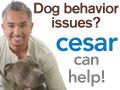 Dog behavior issues? Dog Whisperer Cesar Millan ca