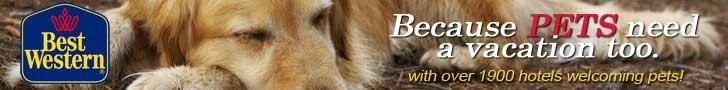 Best Western Hotels - pentru ca si animalele dvs de companie merita o vacanta!