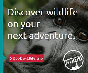Discover Wildlife on your next adventure 300x250