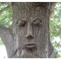 10% off Tree Faces