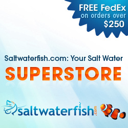 Saltwaterfish.com: Your Salt Water Fish Superstore