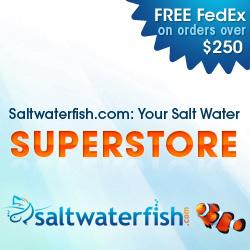 Saltwaterfish.com: Your Salt Water Fish Superstore