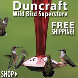 Shop Duncraft Wildbird Superstore for Everything You Need for Backyard Birdfeeding!