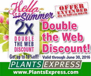 Hello Summer from Plants Express