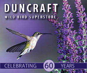 Save up to 40% off Duncraft Overstock