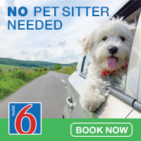 Pet friendly stays for your colorado vacations at Motel 6