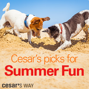 Cesar's Picks for Summer Fun