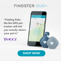 Findster Media Quotes - Yahoo!