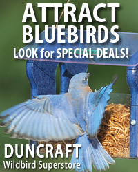 Save on Select Bluebird Favorites!