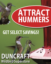 Save on Select Hummer Favorites!