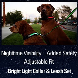 Cesar Millan's Bright Light Collar and Leash Set