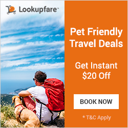 Pet Friendly Travel