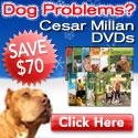 Save $70 on Dog Whisperer Cesar Millan's DVDs