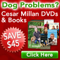 Save $45 on Dog Whisperer Cesar Millan Books & DVD
