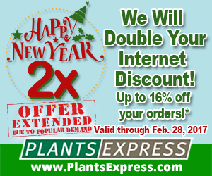 New Years 2x from Plants Express