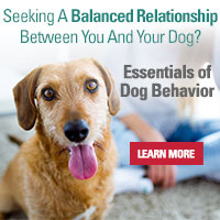 Essentials of Dog Behavior 2-DVD Bundle with bonus features | Cesar's Way