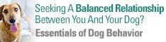 Essentials of Dog Behavior 2-DVD Bundle with bonus features | Cesar's Way