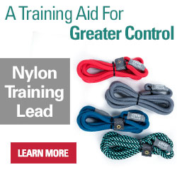 Nylon slip collar lead- Designed as a training aid for walking your dog