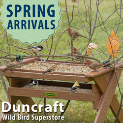 Shop Duncraft Wild Bird Superstore This Spring for over 300 Exciting New Arrivals~