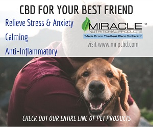 CBD For Your Best Friend Banner