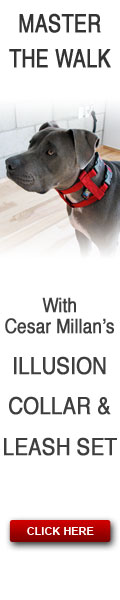 Cesar Millan's Dog Collar