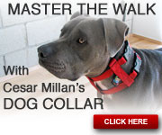 Cesar Millan's Dog Collar