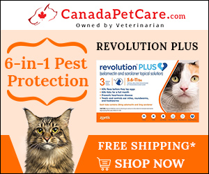 Newly Introduce Revolution Plus for Cat is Here! Buy Now & Get 12% Discount with Free Shipping! Use