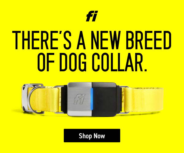 Fi GPS Dog Collar