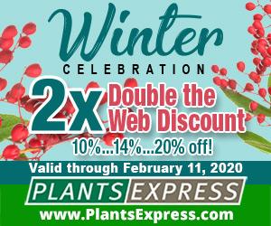 Image for Winter Celebration 2X 2020