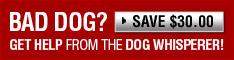 Cesar Millan Dog Training