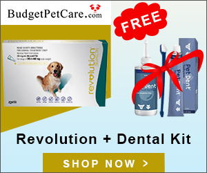 Free Dental Kit with Revolution 12 Doses + Extra 5% Off & Free Shipping