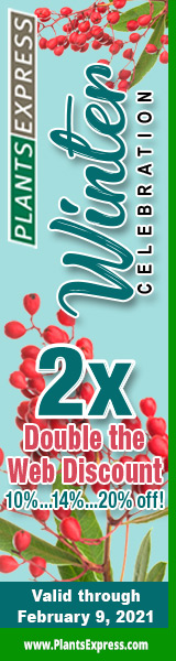 Winter Celebration 2X! Up to 20% off from Plants Express