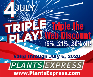 Image for July 4th Triple Play 2020