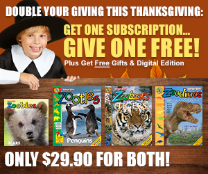 Free Shipping on Zoobooks, Zootles or Zoobies