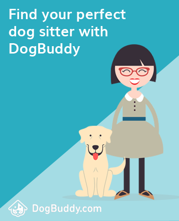 dogbuddy advert