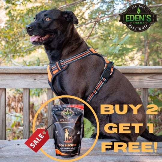 Banner announcing buy 2 get 1 sale on CBD dog biscuits form Eden's Herbals