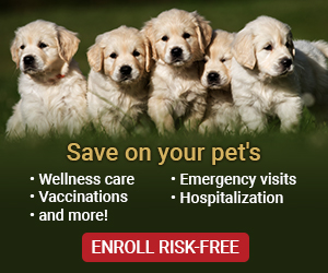 Save on your pets Dog - PetAssure.com
