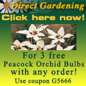 Use coupon #G5666 for 3 free Peacock Orchid Bulbs!
