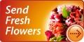 Send Fresh Flowers and make someone happy!