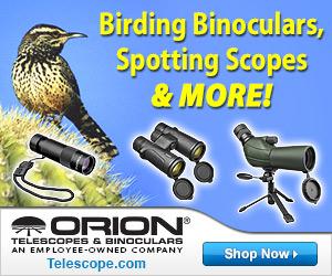 Best Birding Binoculars and Scopes!