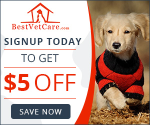 Best Vet Care - Sign Up Now – Earn Unlimited