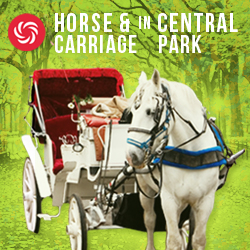 Tour in carrozza di Central Park
