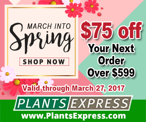 March into Spring from Plants Express